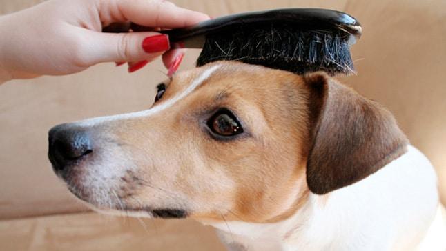 cepillos alisadores para mascotas