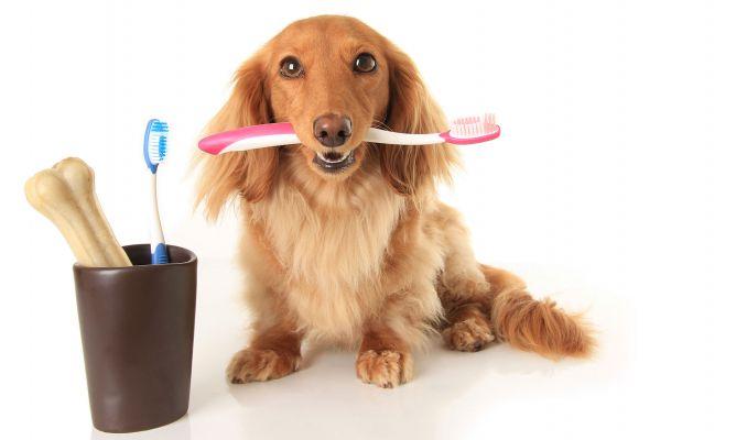 cepillos de diente perro