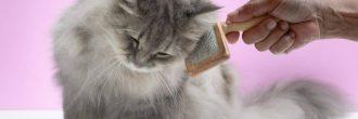Cepillo para gatos